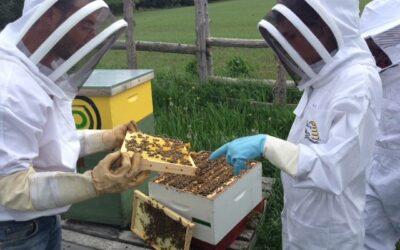 Le rucher bourdonne pour les petits et les grands