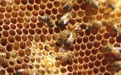 Vente de MIEL du rucher de l'école